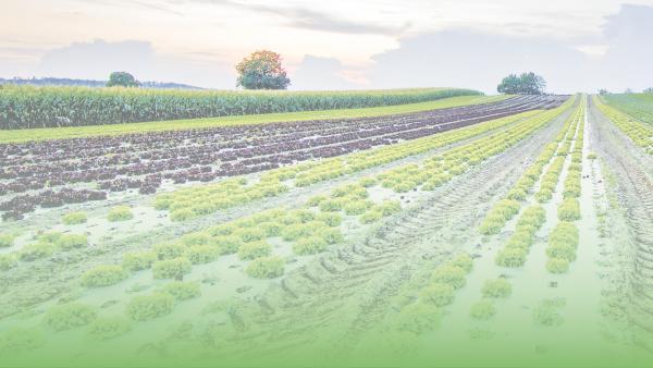 c76f608a72d Regenerative agriculture. Drawdown ranking: 11